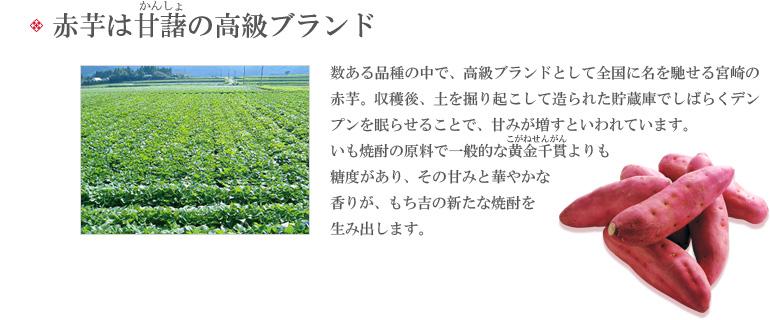 太陽と大地が育み育てた宮崎の宝石、「赤芋」。